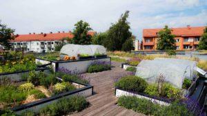 urban gardening sweden