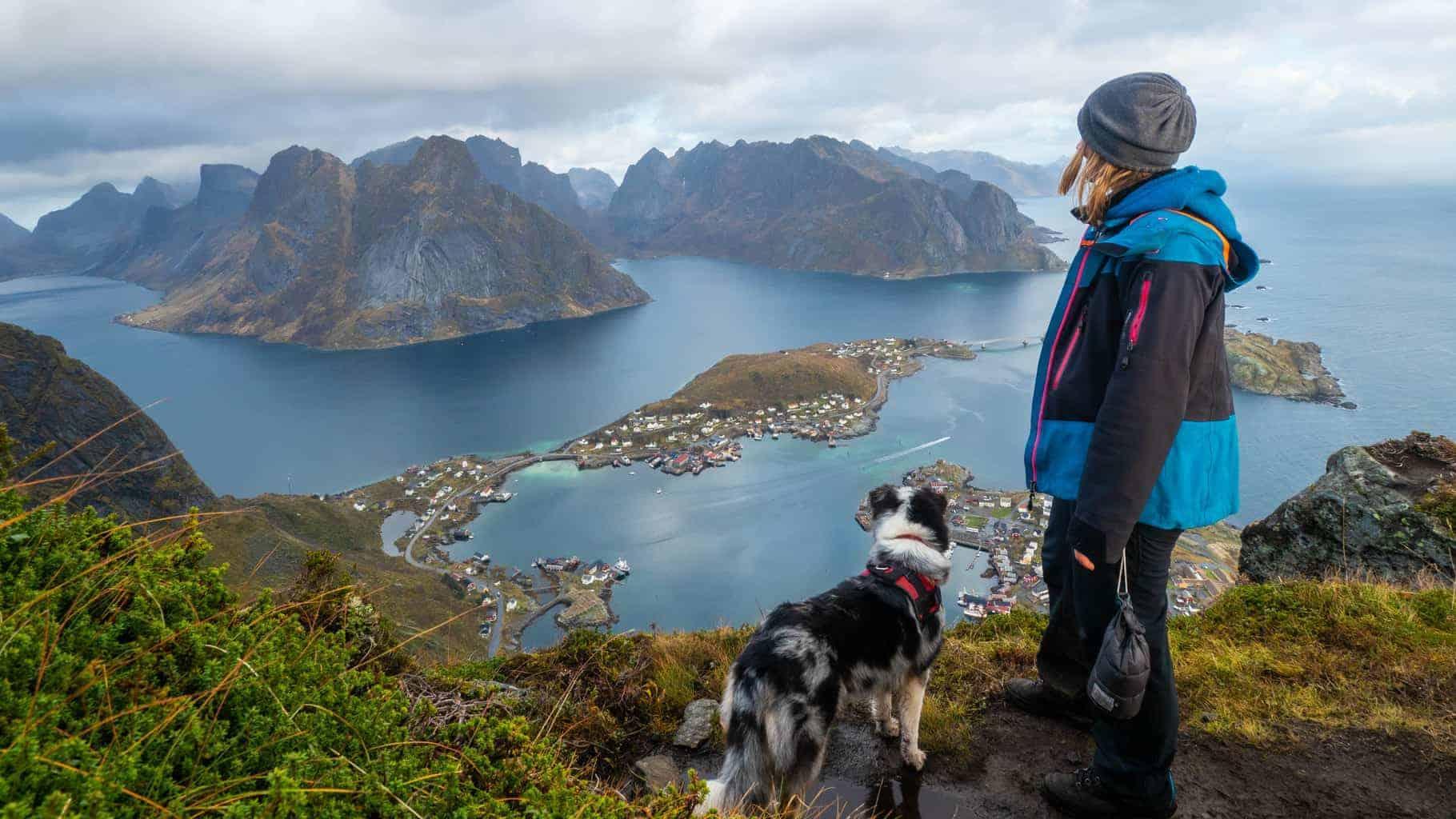 Australian Shepard in Norway