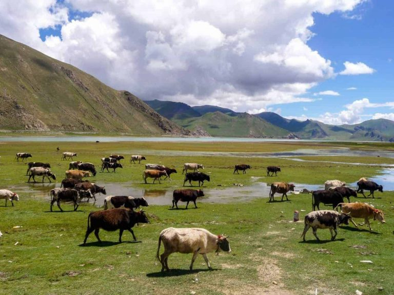 beautiful nature and landscape pictures of Tibet