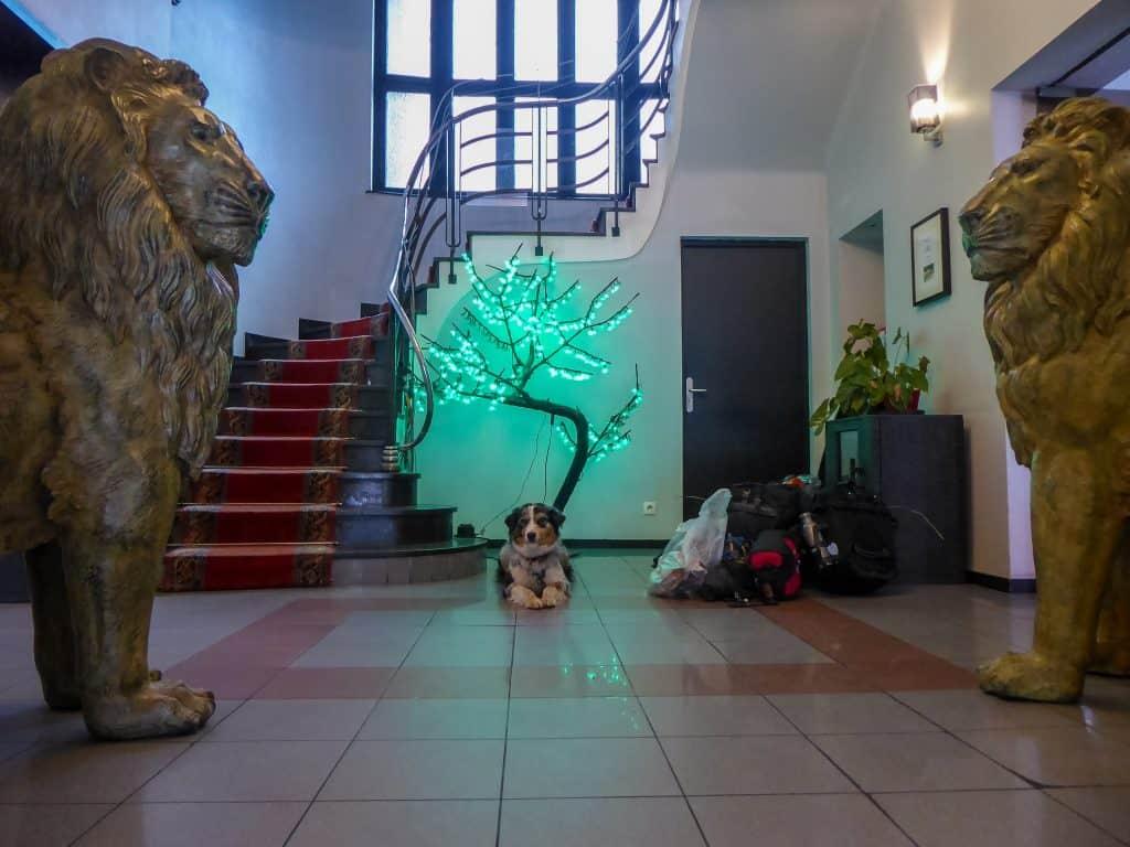 ein hund liegt im eingang vom hotel esplanade in strasbourg